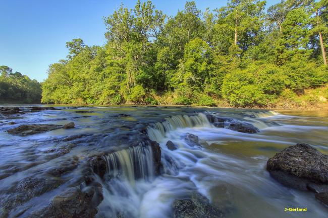 In Forest Land: Special Places in the East Texas Pineywoods
